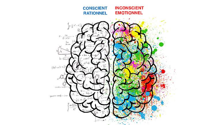 2 hémisphères cerebraux